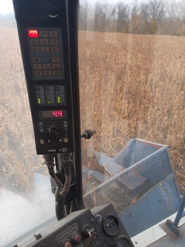 10 октября 2020 - Уборка амаранта. Амарантовое поле из кабины комбайна.